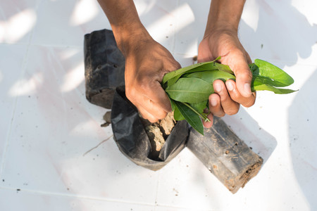 saplings: Man hand are destroying saplings concept destruction of natural resources and the environment. Stock Photo