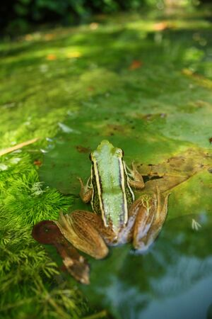 -Close up of frog with green background