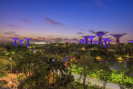 SINGAPORE-JUNE 28 the Supertree Grove in the Graden by the Bay with sunrise on JUNE 28, 2015 in Singapore Reklamní fotografie - 50345101