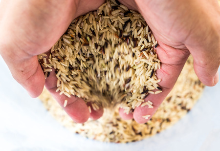cereals holding hands: Hand holding raw brown rice to bucket