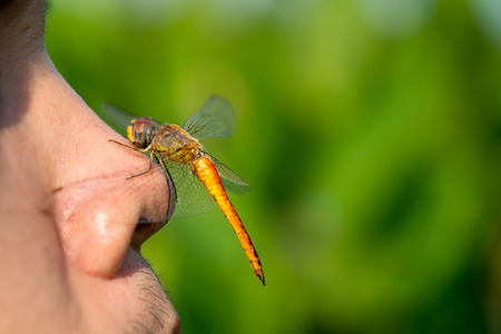 perching: Dragonfly perching on nose of man