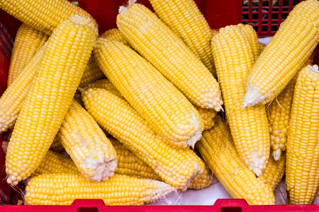 ingradient: Raw corns in red basket. Top view, selective focus. Stock Photo
