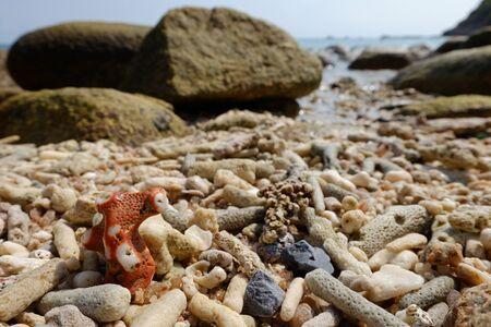 seashores: beautiful stones on seashores