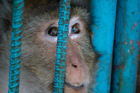 Caged monkey in zoo photo