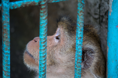 Sad monkey behind cage in zoo. photo