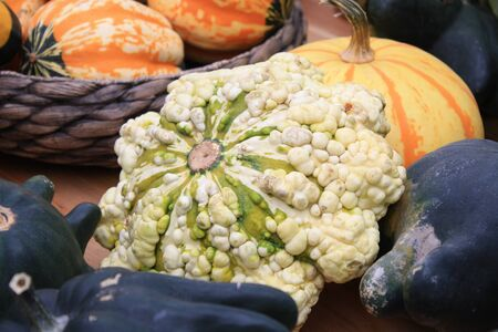 Pimply colorful vegetables, pattypan squashes and pumpkins at harvest festival in autumn, colorful