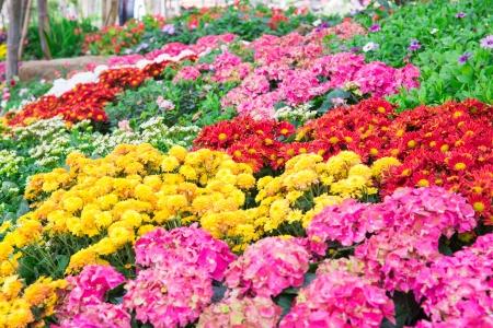 Winter Flower garden in thailand