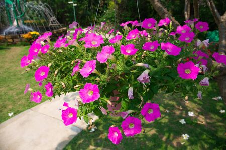 Indoor garden in thailand
