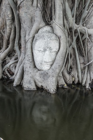 Head of Buddha under a fig tree in ayutthaya Province photo