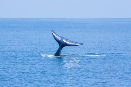 Whale tail in the sea, Thailand. photo