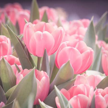 beautiful  Color Vintage tulips