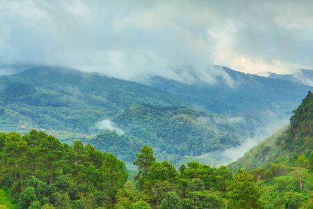 elegant forest with fog