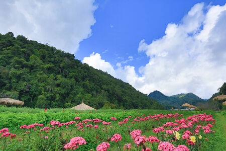 Garden of colorful flowers of the mountain.