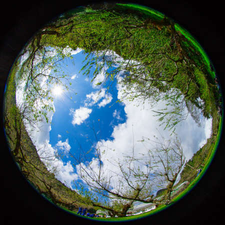 fisheye ,plum trees in winter thailand photo