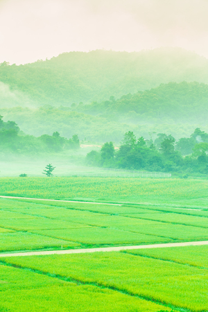 Rice paddy fields, natural mist winter.