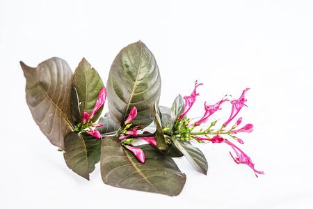 Gold leaf, silver leaf, flower, treelucky.