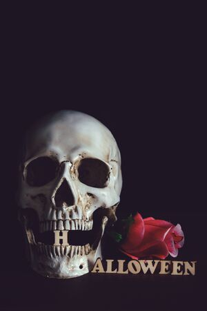 Human skull with red roses  and wooden alphabet Halloween  on black bagkground.