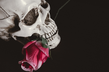 Human skull with red roses on black bagkground.Skull Halloween Stock Photo