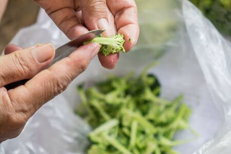 The hands that are cutting vegetables broccoli is a piece to cook.