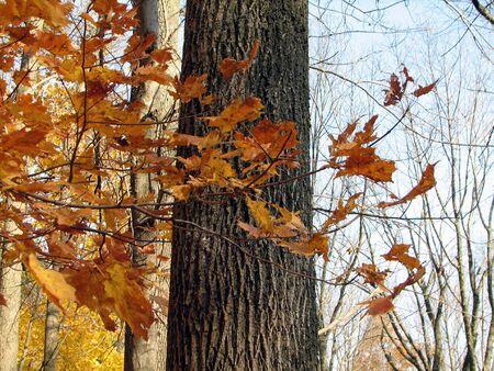 An orange, leafy branch in front of a tree trunk in Massachusetts