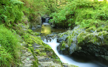 Lake District nature at its best photo
