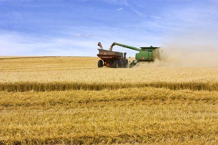 Kombinieren Sie schneiden Korn in Feld Standard-Bild - 5462315