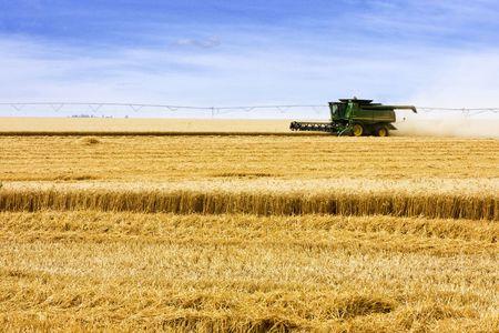 Kombinieren Sie schneiden Korn in Feld Standard-Bild - 5462294