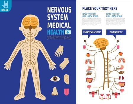神経システムです。交感神経系。インフォ グラフィックの要素。医療コンセプト Medical.Vector フラット アイコン漫画デザイン illustration.isolated 白い背