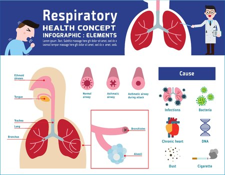 Respiratory system of human.illustration about anatomy and physiology.infographic disease medicalbanner header healthcare concept.Vector icon flat cartoon designIsolated on white background. Stock Illustratie