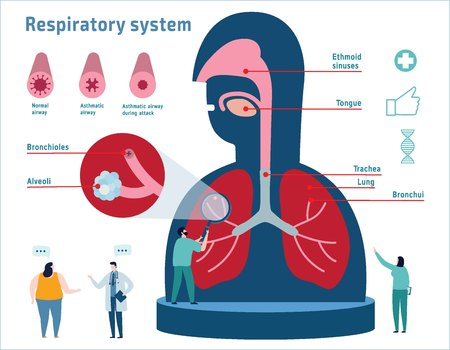 Human Respiratory System anatomicalvector illustration infographic.healthcare medical education banner concept.cross section diagram with nasal cavity,throat, esophagus, trachea, lungs and alveoli Vettoriali