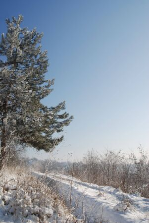 winter rime and snow covered tree tops on blue sky and a road passing by photo