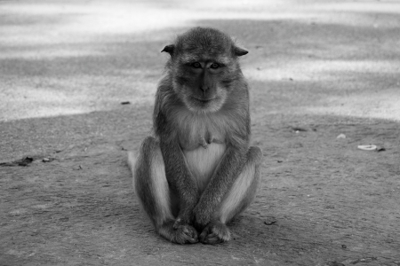 Monochrome picture of monkey is lonely photo