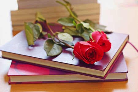Red roses placed on the purple book Stock Photo - 25751403