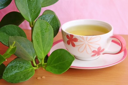 potation: Hot tea and plant placed on the table