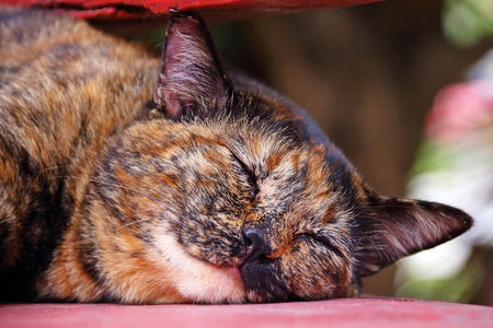 Cute Thai cat sleeping on the floor photo