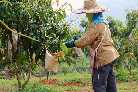 Farmer was working in the farmland at Thailand