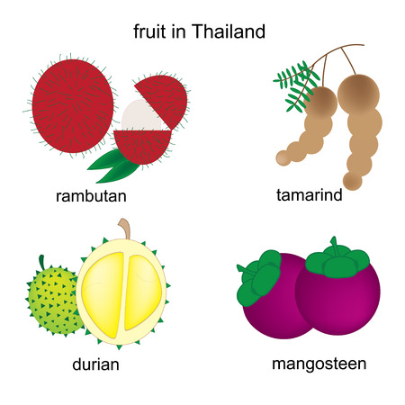 fruits in Thailand on the white background Vector