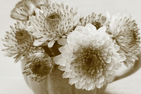 Chrysanthemum in vase on wooden table, Sepia tone. photo