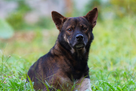 Ticks on the black dog.