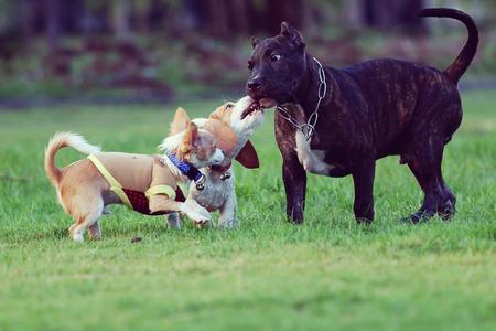 perros jugando: Perros jugando felizmente en la hierba