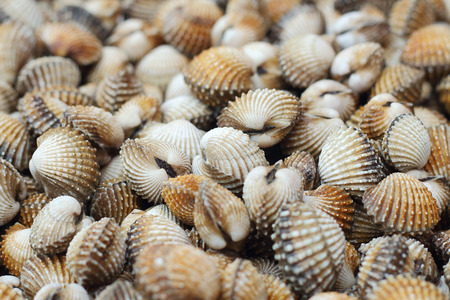 cockles: fresh cockles background