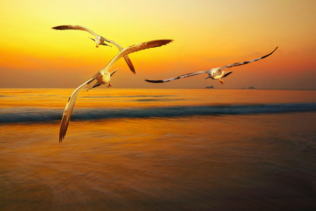 Seagull in the light of the sun in the morning on the beach Stock Photo