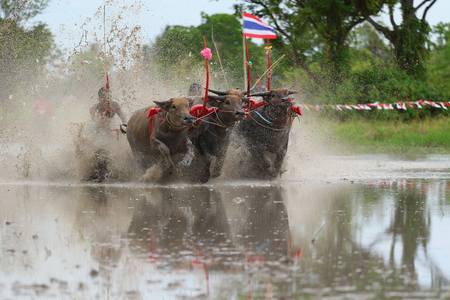 festal: Chon Buri, Thailand - July 19, 2015: Buffalo tradition as reflected in Chonburi province is one of the unique traditions of the province of chon buri, which was held for more than 100 years.
