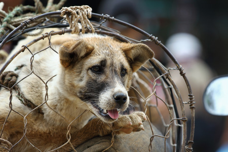 piteous: dog in cage, The dog trade in Vietnam market, Vietnamese eat dog