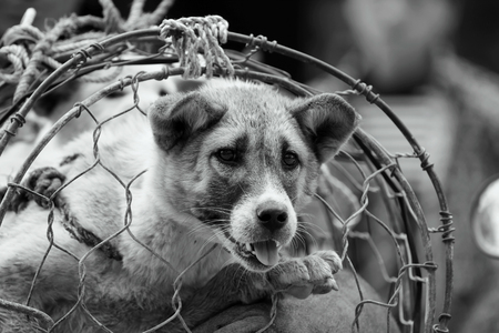 black and white photography: Black and white photography dog in cage, The dog trade in Vietnam market Stock Photo