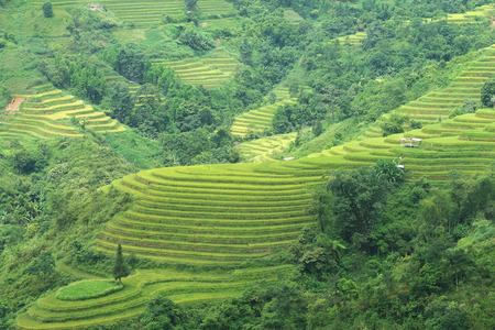 cultivator: Rice terraces in Hagiang, Vietnam Stock Photo