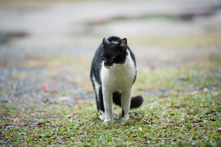 moggy: A cat on grass Stock Photo