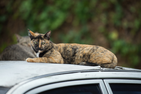 moggy: a cat on a car