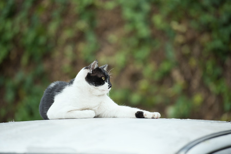 moggy: a cat on stretch lazily a car