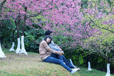 swain: Two lovers in the Wild Himalayan Cherry park